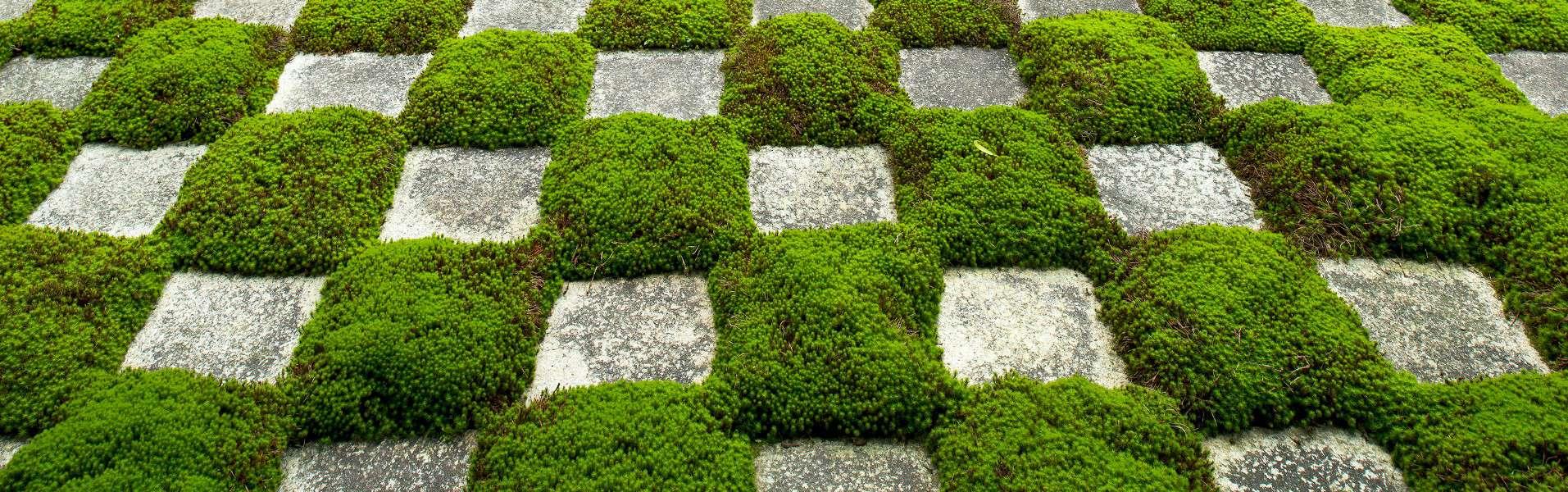 Verteck Giardini